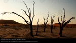150820-tree-loneliness-death-environment-africa-desert-photocase-stock-photo-large