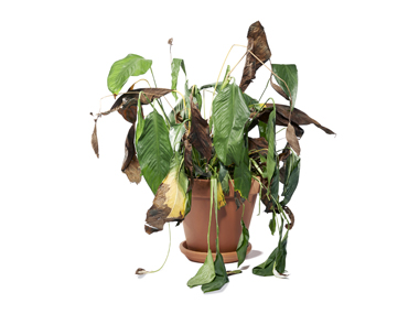 01-you-can-save-it-dying-plant-sl